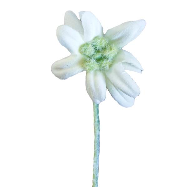Ansteckblume Herren Edelweiß